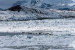 Iceland 2019 -_DLP7283